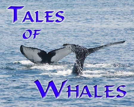 Photo Gallery - Tales of Whales
